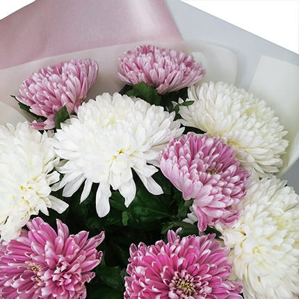 9 white and pink chrysanthemums - order with delivery