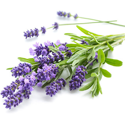 """Aroma diffuser """"Lavender"""" - order with delivery"""