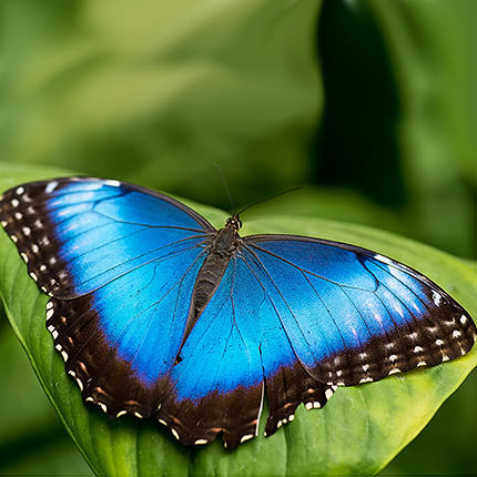 """Live butterfly """"Morfida"""" - delivery in Ukraine"""
