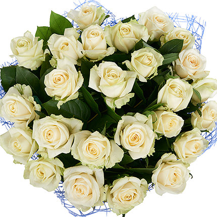 25 white roses - order with delivery