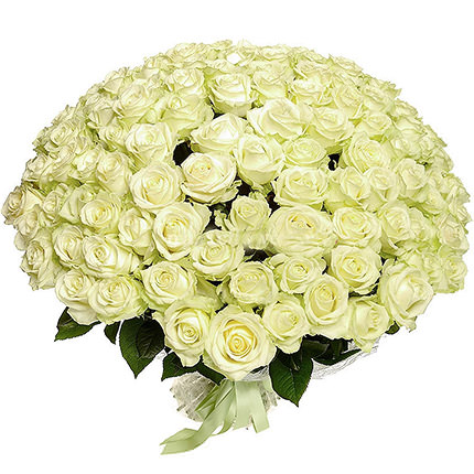 75 white roses - order with delivery