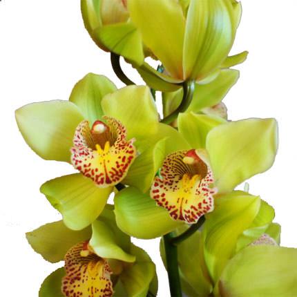 """Букет """"Дикая орхидея"""" - доставка по Украине"""