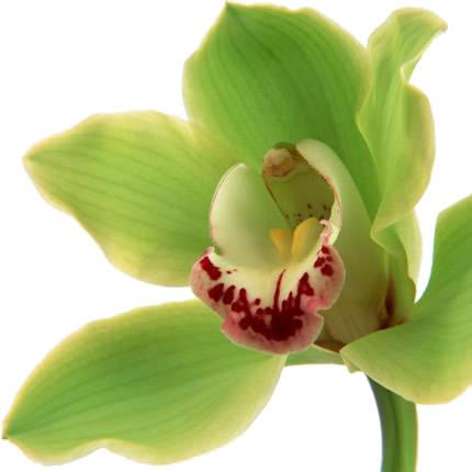 """Букет """"Дикая орхидея"""" - заказать с доставкой"""