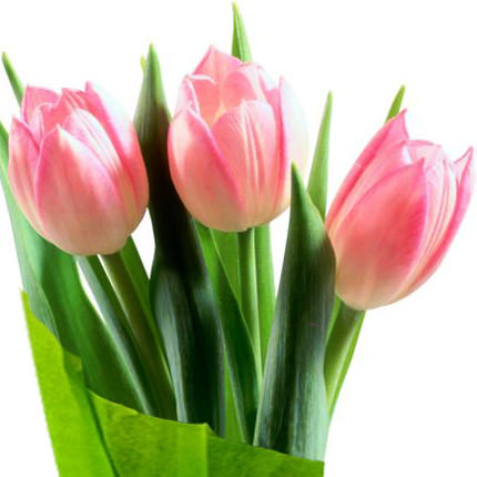 "Bouquet ""Tenderness"" - delivery in Ukraine"