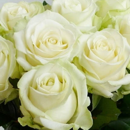 White rose (by an item) - delivery in Ukraine