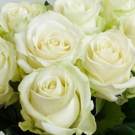 Біла троянда (поштучно) - доставка по Україні