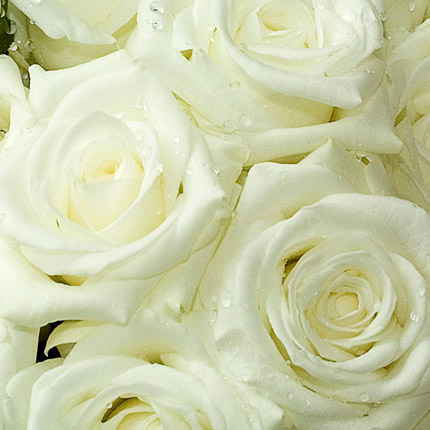 White rose (by an item) - order with delivery