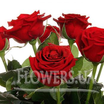 Букет червоних троянд - доставка по Україні