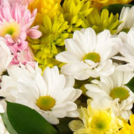 "Bouquet of chrysanthemums ""Melody"" - order with delivery"