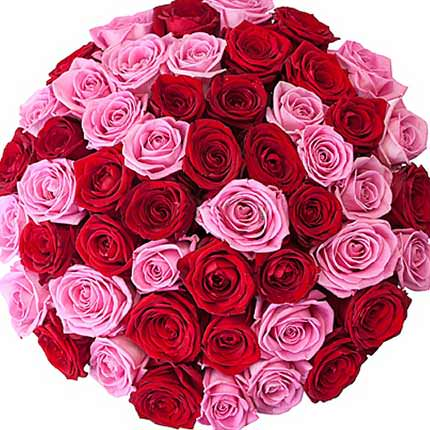 51 red and pink roses - delivery in Ukraine