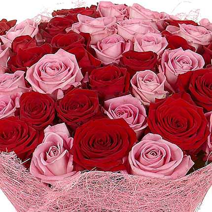 51 red and pink roses - order with delivery