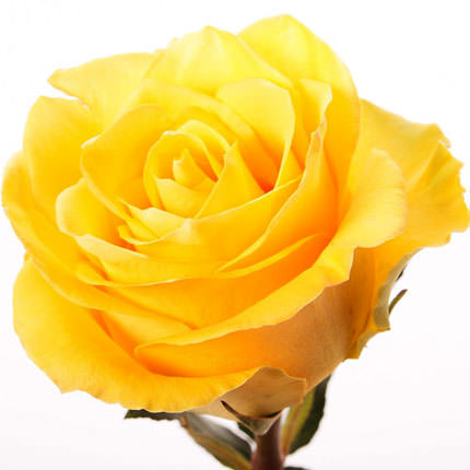 "Bouquet of yellow roses ""Fairy Tale"" - order with delivery"