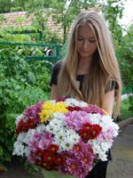 25 разноцветных хризантем