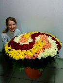 555 різнокольорових троянд