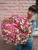 101 різнобарвна кущова троянда