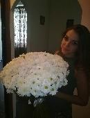 51 біла хризантема