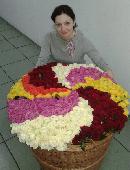 555 разноцветных роз