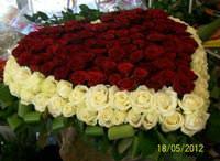 The ocean of roses