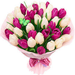 39 delicate tulips