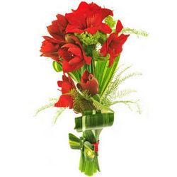 Bouquet of amaryllis