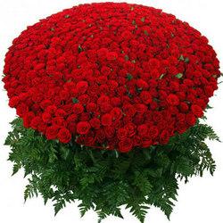 1000 троянд!