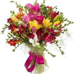 25 multicolored freesias