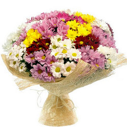 25 різнокольорових хризантем
