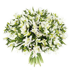 51 white lilies