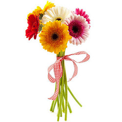 7 different color gerberas