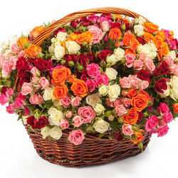 "Basket ""101 colorful spray roses"""