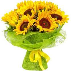 11 bright sunflowers