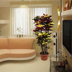 "Houseplant ""Croton"" (branchy)"