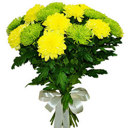 15 green and yellow chrysanthemums