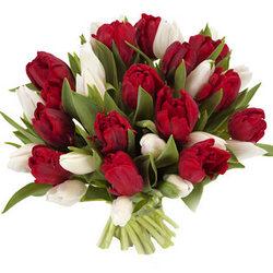 29 красных и белых тюльпанов