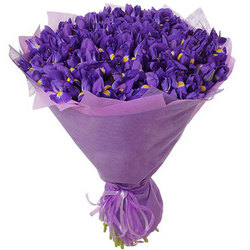 51 purple irises
