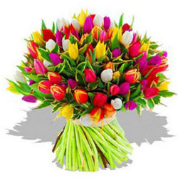 101 multicolored tulips