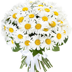 "Bouquet ""51 sunny chamomile"""