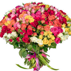 101 multicolored spray roses