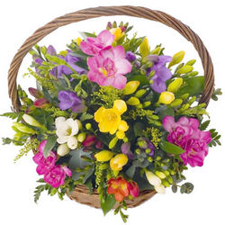 Basket of colorful freesias