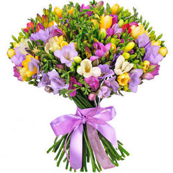 101 colorful freesia