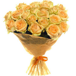21 кремовая роза
