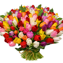 101 multicolored tulips!