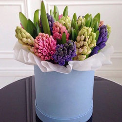 "Flowers in a box ""15 delicate hyacinths"""