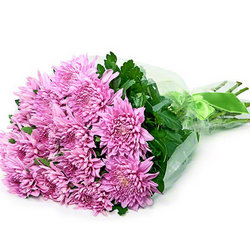 15 рожевих хризантем