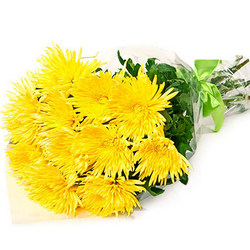 15 yellow chrysanthemums