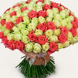 251 белая и розовая роза
