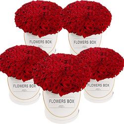 1000 красных роз!