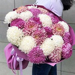 25 белых и розовых хризантем