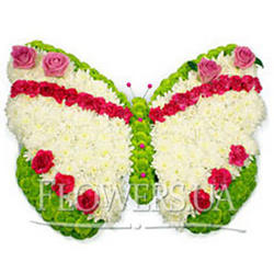 Butterfly from flowers