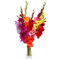 "Bouquet ""Fireworks"""